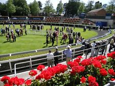 Make Money - Prime Lays -  Horse Racing Betting Betfair System