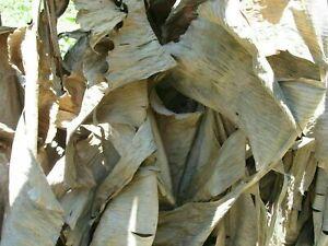 Natural Sun Dried Banana leaves for Aquarium and Pet supplies Free Shipping