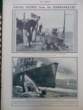 1915 DARDANELLES PET PIG, INFLEXIBLE PICKET BOAT RESCUE GALLIPOLI  WW1 WWI