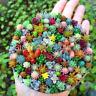 Bonsai 100 Seeds Bag Real Mini Cactus Rare Succulent Perennial Herb Plants NEW S