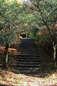 Print Photograph Flower Trees Wall Decor A4 Autumn Steps (Poster Art Picture)