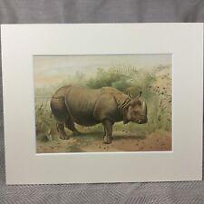Antique Print Victorian Art Indian Rhinoceros Rhino Natural History 1894
