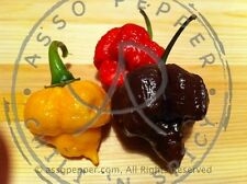 PEPERONCINO 30 SEMI TRINIDAD MORUGA SCORPION RED YELLOW E CHOCOLATE! DA GUINNESS