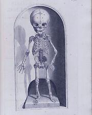 Mutter Museum Medical Skeleton Anatomy Chart Illustration 8x10 Canvas Art Print