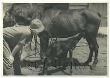 Vintage Photo RODGES German Jewish Group 1940 Eretz Israel Palestine MARE & FOAL