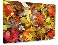 STUNNING WOODLAND AUTUMN LEAVES CANVAS PICTURE PRINT CHUNKY FRAME LARGE #3620