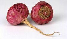 Purple Maca Seeds - Lepidium Meyenii - super food - medicinal herb