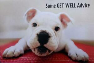 Funny Get Well Advice HALLMARK Heartline GET WELL CARD Bulldog Dog