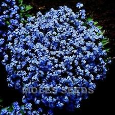 FORGET ME NOT BLUE SPRING FLOWERS AP 200 SEED FOR COTTAGE BORDER EASY TO GROW