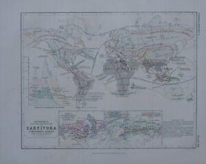 1850 HAND COLOURED MAP WORLD DISTRIBUTION CARNIVORA CARNIVOROUS ANIMALS