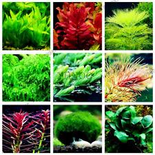 100 Pcs Seeds Aquarium Plants Bonsai Water Grass Aquatic Garden Fish Tank Rare N