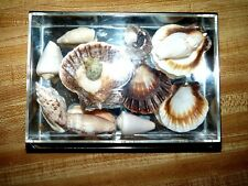 5 x 7 Mirrored shell display freestanding tabletop frame assorted seashell type