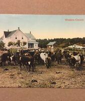 Postcard, Western Canada Homestead 1914, Alberta Canada, Vintage P21
