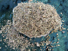 Patchouli ERBA incantesimi erbe INCANTESIMO forniture pagano wicca incenso magia