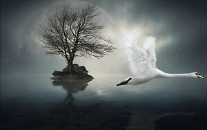 Framed Print - Flying White Crane Gothic Tree Large Moon (Picture Swan Art)