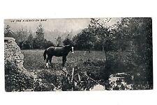 CPA 6,5 X 13,5 cm - HERICY EN BRIE (Seine et Marne) - Un pré à Héricy (cheval)