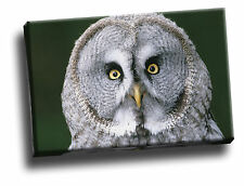 Great Gray Owl, Finland Giclee Canvas Bird Life Picture Art