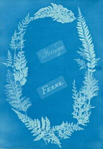 Anna Atkins Foreign Ferns Giclee Art Paper Print Paintings Poster Reproduction