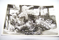 Rare Vintage RPPC Real Photo Postcard 1930-1950 California Knott's Berry Gardens