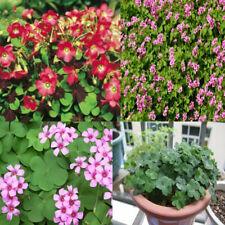 100Pcs Oxalis Flowers Seeds Rare 5 Kind Home Garden Decor Pot Plant