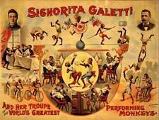 ADVERT CIRCUS SIGNORITA GALETTI PERFORMING MONKEYS ART PRINT POSTERABB5794B