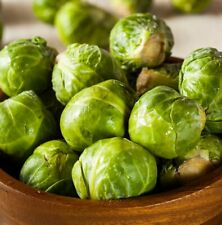 600+ Brussel Sprouts Seeds | Non-GMO | Fresh Vegetable Garden Seeds | From USA