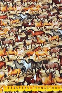 Best in Show Gymkhana Horses Cotton Quilting Fabric 12 YARD