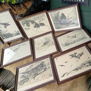"""8 x Framed Vintage Annotated Pencil Sketch Prints Game Birds  8"""" x 6"""""""