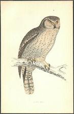 1860 vintage HAWK OWL BIRD original hand painted engraving MORRIS