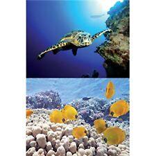 TetraDeco Tetra Deco Art Aquarium Poster 2 Sided Turtle & Reef Theme 60cmx45cm