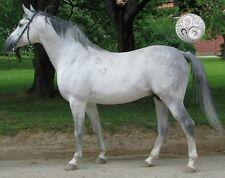 "DOUBLE Light Gray Horse False Tail 80CM 32"" False Horse Tail EXTENDED"