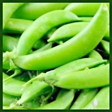 Sugar Snap Pea Seeds | Pea Seeds for Planting Home Gardens | Non-Gmo