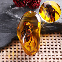 Beautiful Amber Hornet Fossil Insects Manual Polishing Insect Specimens