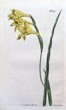 Yellow Engraving Art Prints