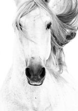 Beautiful Horse Black & White Equestrian Quality Canvas Print Large