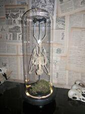 Taxidermy  fruit bat skeleton: led lights in dome:)