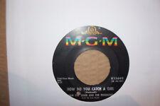 SAM THE SHAM,  HOW DO YOU CATCH A GIRL. MGM RECORDS 1966  EX+