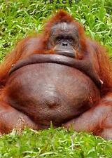 Orangutan Blank Photo Greeting Card Fun Tracks Any Occasion Greetings Cards