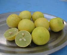 Citrus aurantifolia / Lime / Citron Galet - lot de 10 graines