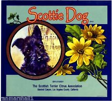 Marshall Canyon Scottish Terrier Dog Orange Citrus Fruit Crate Label Art Print