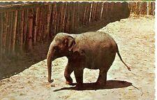 ONTARIO CANADA ZOOLOGICAL PARK WASAGA BEACH ASIAN ELEPHANT (EL31)