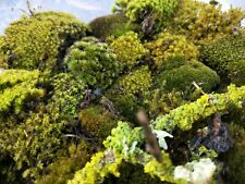Sustainably sourced bulk Assorted live moss pack for terrarium bonsai vivarium
