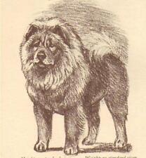Chow Chow - Vintage Dog Print - 1954 Megargee