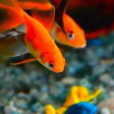 Bedarf für Fische & Aquarien