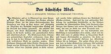 Paul Elsner Der dänische Adel v. Oldenburg Frhr. Rosenkranz- Charisius Le...1907