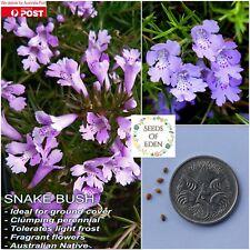 15 SNAKEBUSH SEEDS(Hemiandra pungens); Australian native shrub,