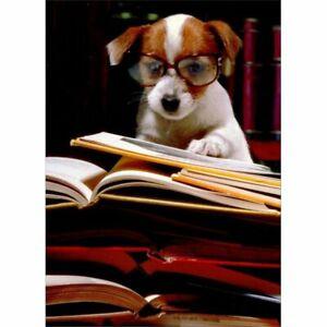 Avanti Press Puppy with Books Funny / Humorous Graduation Congratulations Card