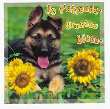 CHIEN  Chiot   CHIENS  carte postale   n°  6028/79  Je t'attends, grosses bises.