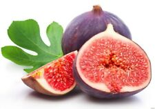 100Pcs Tropical Fig Seeds Fig Tree Bonsai Fruit Garden Plant Fresh Seeds