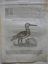Schnepfe Scolopacidae Orig Holzschnitt 1555 Belon Ornithologie